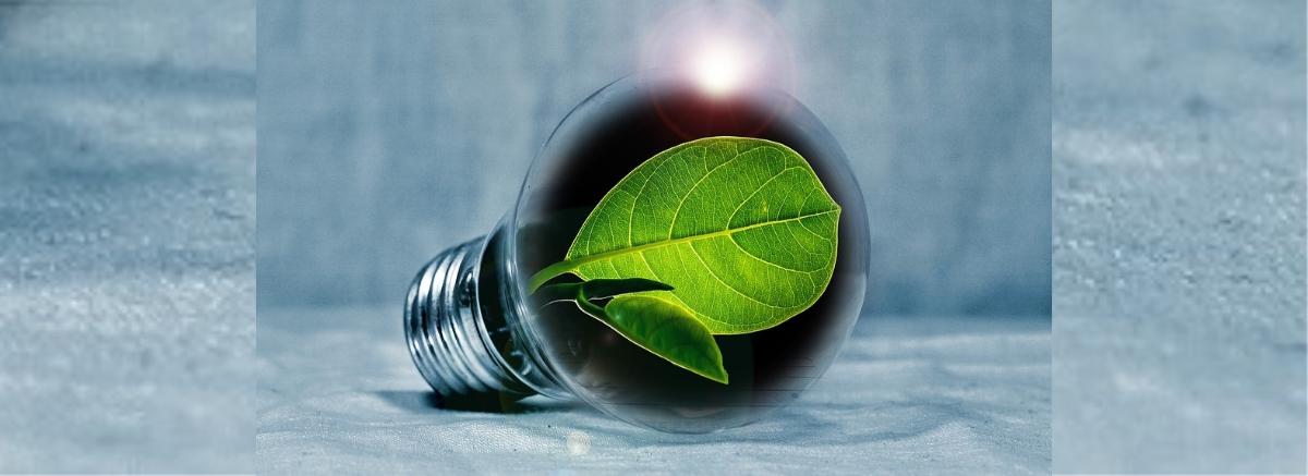Talking Green: It's a Choice!