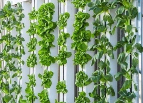 Vertical Farming Technology: How does it Work?