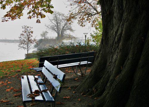 Public Ownership of Public Space